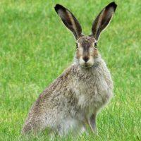 Rabbit_01-1536x864